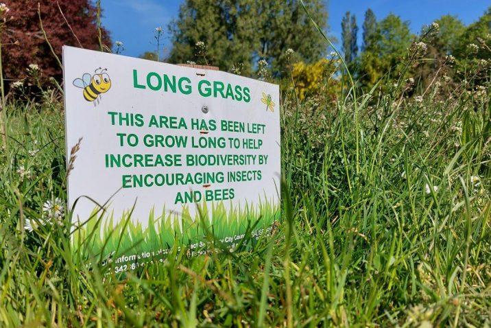 Salisbury City Council Long Grass
